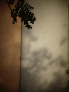 246. Platz | Einzel | Katharina F. (937) | Licht und Schatten