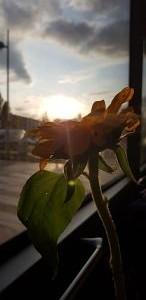 37. Platz | Handy | Kavya Markose (131) | Das Streben nach Licht