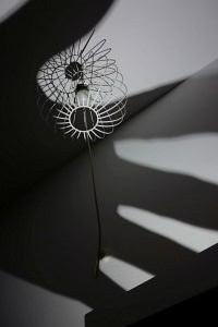 50. Place | Einzel | Bry M. (161) | Pursuit of Light