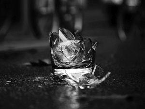 38. Place | Einzel | Robin L. (346) | fragments
