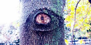 58. Place | Handy | Goodlemon (559) | I spy with my little eye