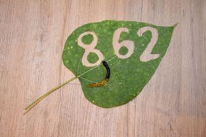 1. Place - Stella T. (862)