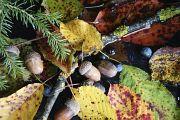 13. Place | Einzel | Manuel T. (533) | autumn and its colours